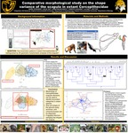 Comparative morphological study on the shape variance of the scapula in extant Cercopithecidae