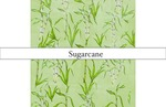 Pattern Project - Sugarcane by Apphia Peters