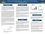 Synergy of Bosutinib and Chk-1 Inhibitor (PF) in Chemotherapy