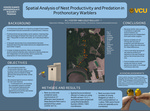Spatial Analysis of Nest Productivity and Predation in Prothonotary Warblers