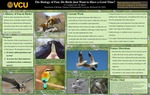 The Biology of fun: Do birds just want to have a good time?